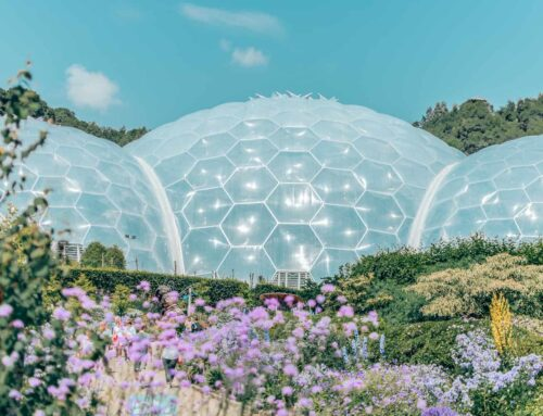 The Eden Project Experience