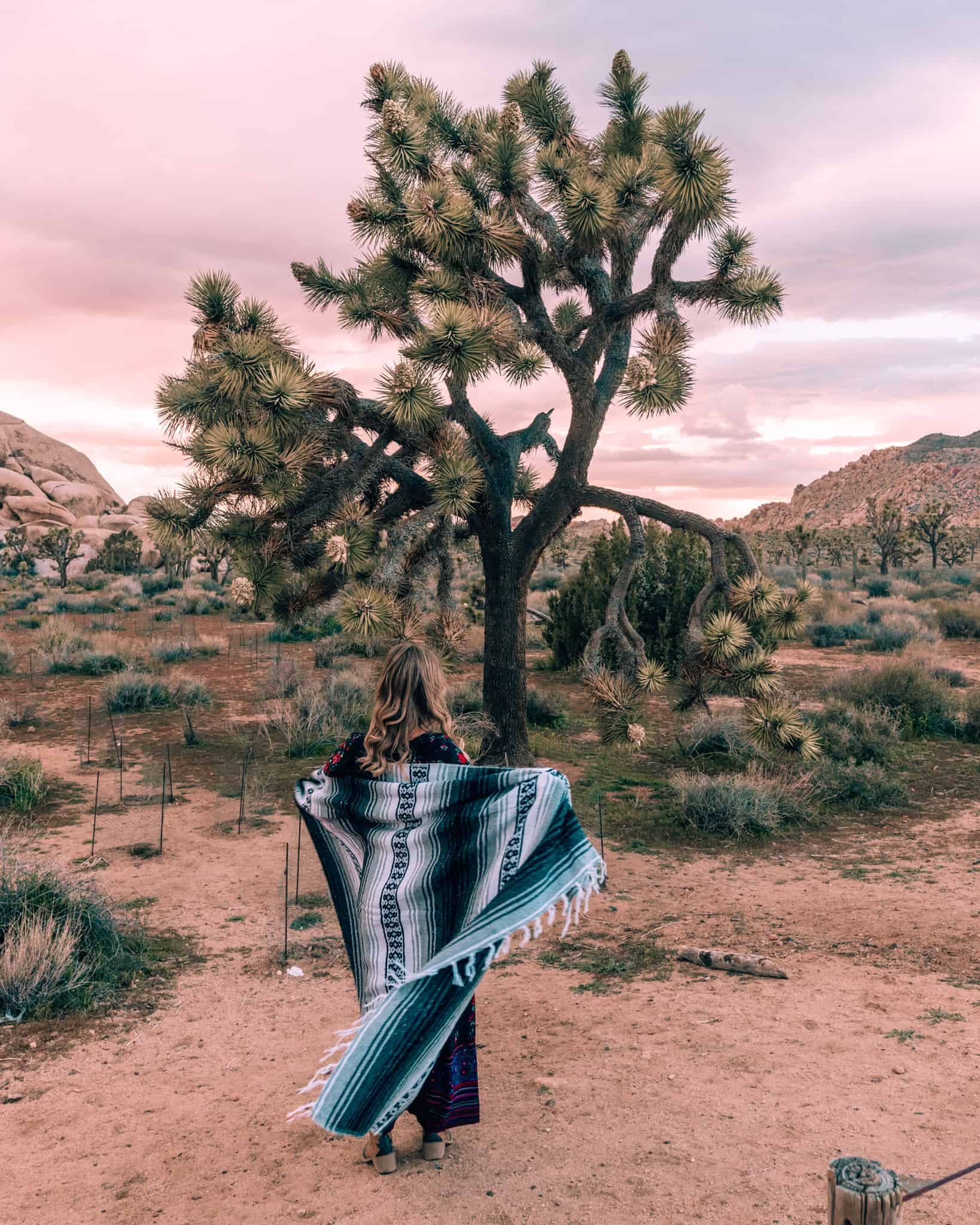 girl standing next to a Joshua Tree