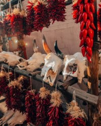 animal skulls and chillies